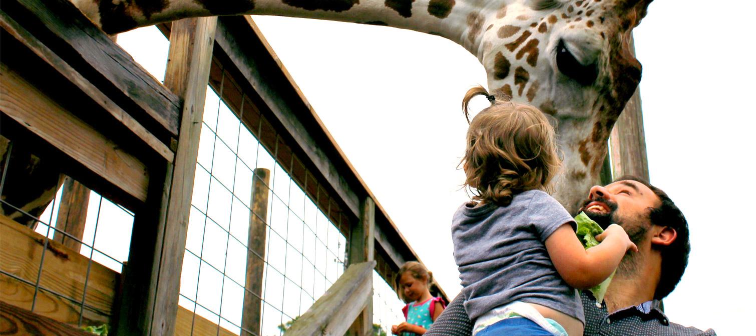 Feed a Giraffe in Panama City Beach Florida