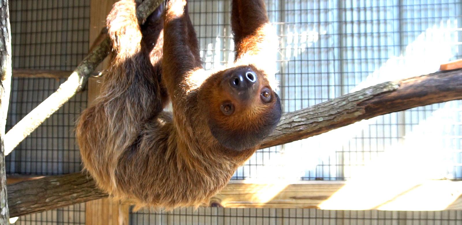 Pet a Sloth at Zoo World Panama City Beach