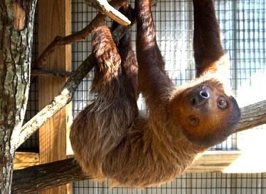Pet a Sloth