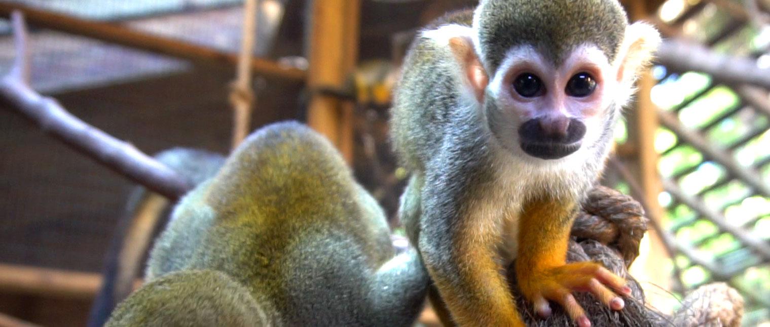 Monkey Mayhem Party Package