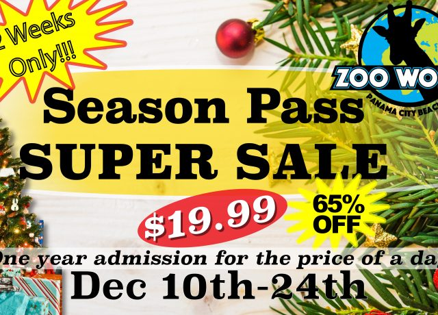 65% OFF Season Pass SALE!