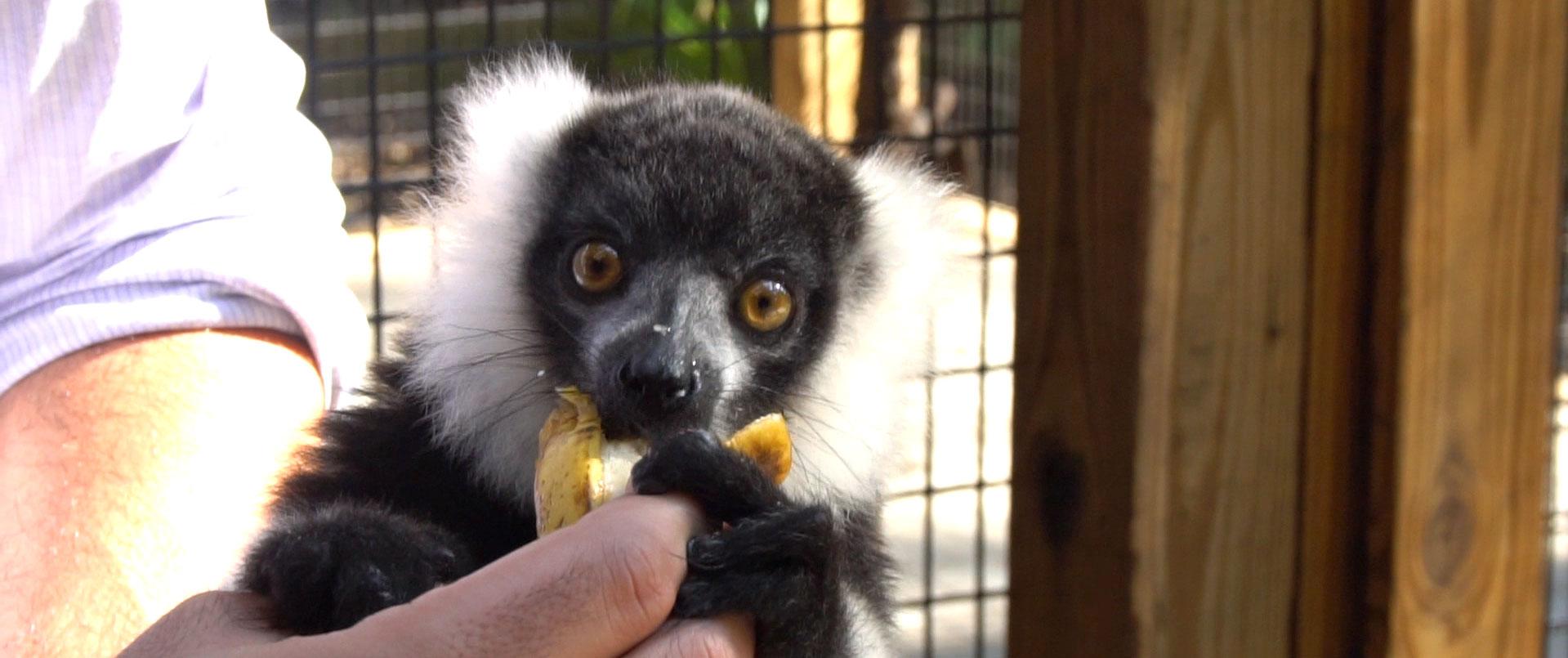 Volunteer at ZooWorld